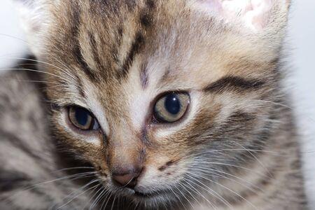 animalitos tiernos: Peque�o gatito