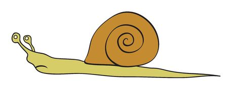 rapidity: Vector snail - slowly animal