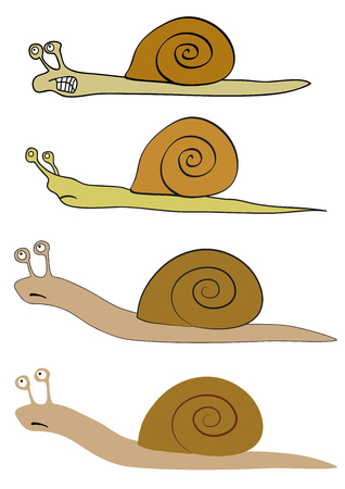 rapidity: Vector illustration of the various snails