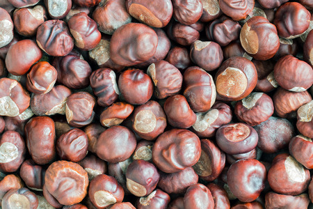 buckeye seed: heap of chestnuts - autumn product