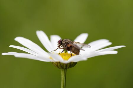 vermin: fly on the plant