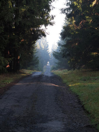 tranquil atmosphere: Long road in the woods
