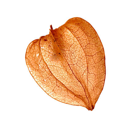 cape gooseberry: Detail of the fruit - Cape gooseberry