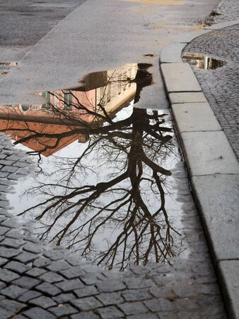 Tree mirroring in the puddle