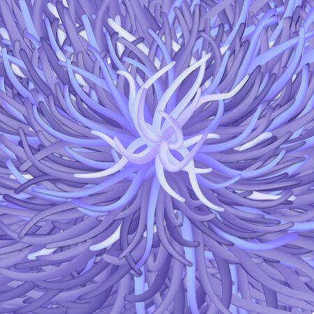 awry: Sea anemone - seaflower