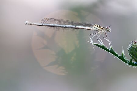 damselfly: Dragonfly on leaf Stock Photo