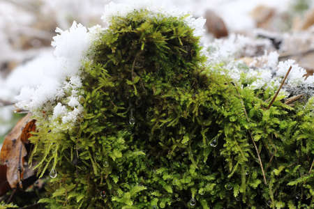 pollutants: Moss in Winter in the Borec hill - natural attraction
