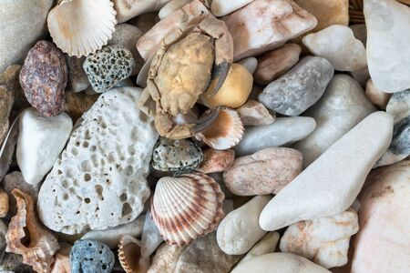 pebblestone: Detail of the various sea pebbles with shells