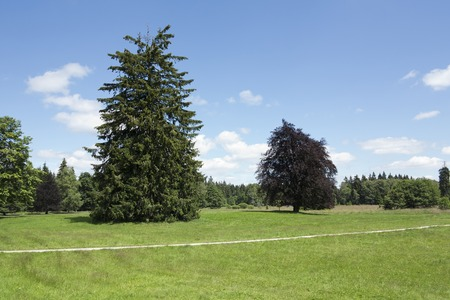 moorland: Sunny day in the park