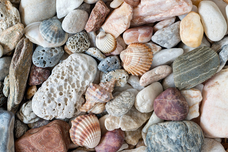 pebblestone: Pebble stones and scallops and shells Stock Photo
