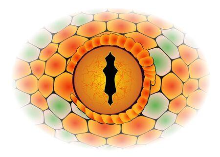 detail: Vector snake eye - detail Illustration