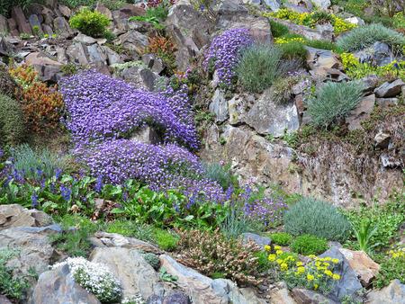Steingarten mit verschiedenen Blumen