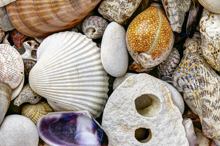 pebblestone: Detail of the pebble stones and scallops and shells