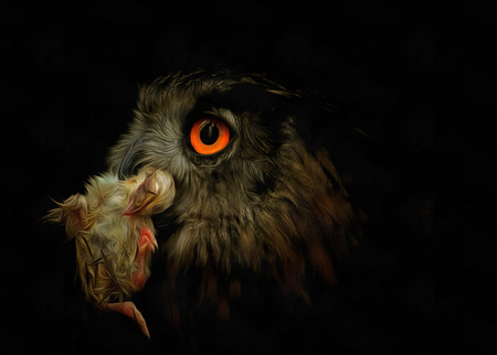 prey: Head owl with prey - Owl with prey