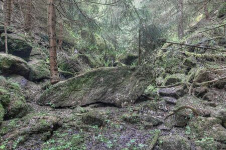 luxuriant: Old luxuriant unmanaged forest - luxuriant deserted forest