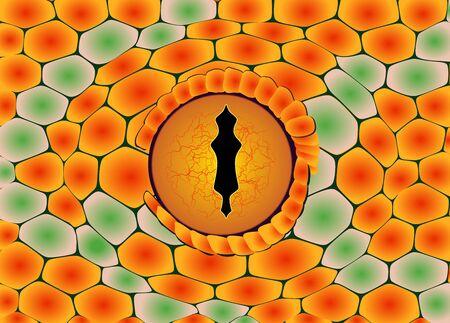 Snake eye - detail