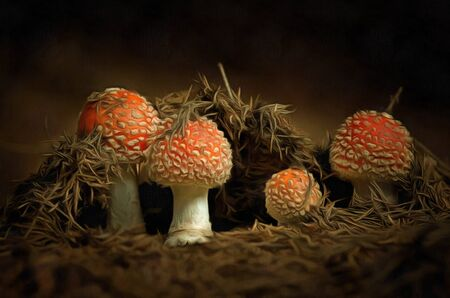 mycology: Growing red toadstool - Amanita muscaria