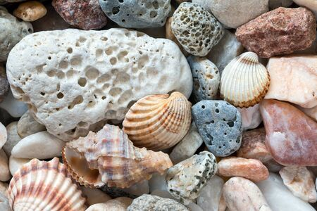 pebblestone: Various sea pebbles on the beach with shells Stock Photo