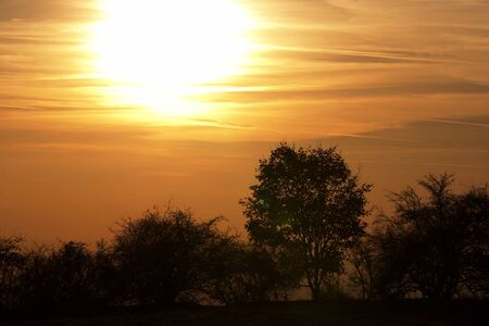 gloaming: Autumn sunset with soliraty tree