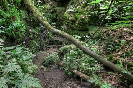 czech switzerland: Gorges on the Kamenice River, Bohemian Switzerland