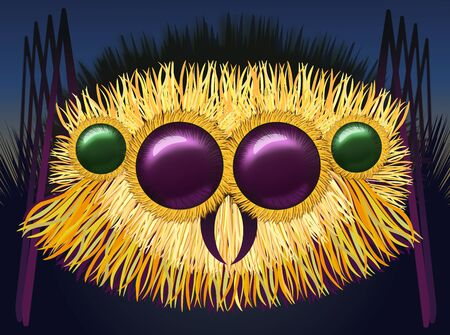 hairy legs: Huge hairy spider - illustration Stock Photo