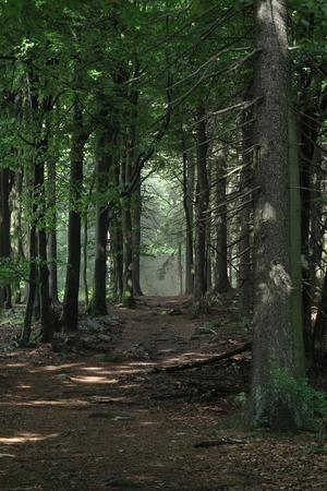 The Dark Forest Way