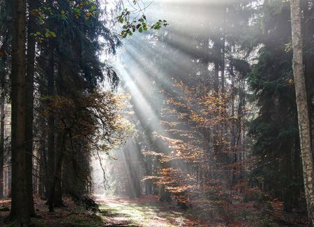 God beams - sun rays n the early morning forest Banque d'images
