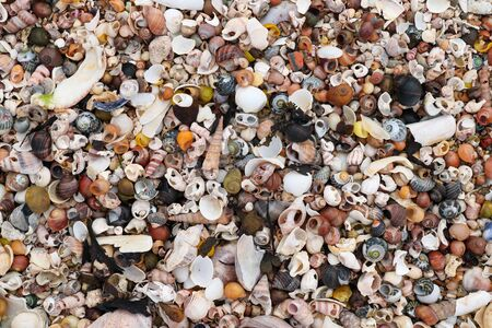 Pile of the shells of molluscs on the sand at low tide