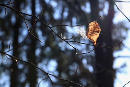 Abstract image of the old leaf and fluff on twigs of tree in back light