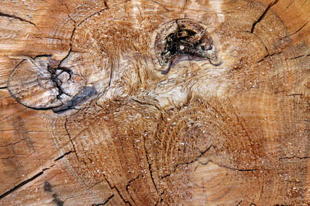 Detail of the cut tree trunk - annular rings