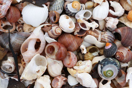 Pile of the shells of molluscs on the beach at low tide