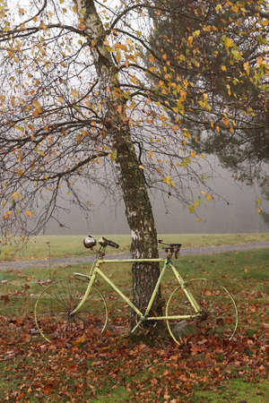 Abandoned old bicycle under autumn birch tree in a foggy day