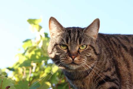 Domestic cat - detail of the head Standard-Bild