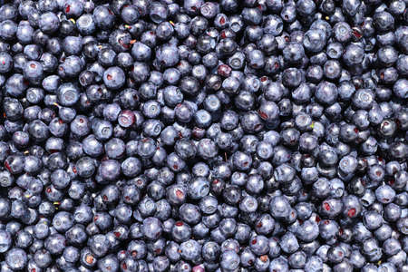 Blueberries - small sweet blue-black edible and health berry of the blueberry plant