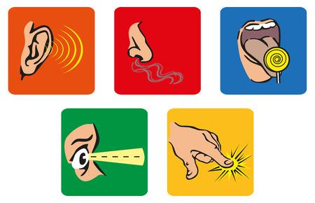 smell: Los cinco sentidos