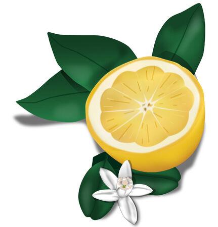 Limón con hojas y flores