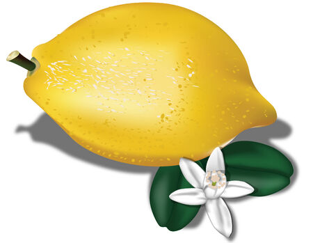 Lemon with leaves and flowers 2  Vector