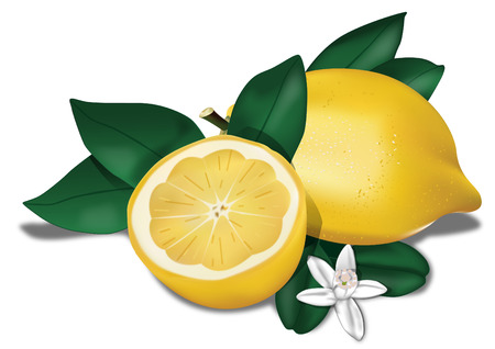 Lemon with leaves and flowers 3