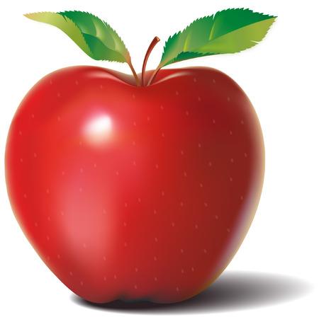 2 つの葉と赤いりんご  イラスト・ベクター素材
