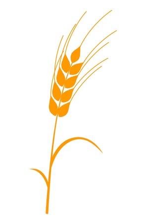 Ear of corn golden stem and leaves