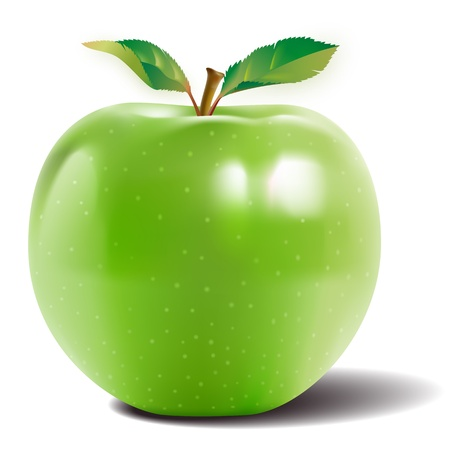 Green apple with two leaves and a reflection on the skin shiny Vector