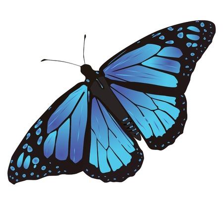 papillon: papillon avec des ailes colorées et un panaché