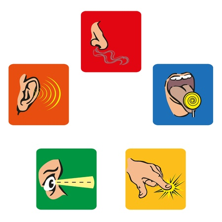 icons that represent the human five senses Vector