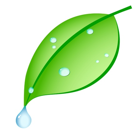 leaf water drop: green leaf with drops of dew on