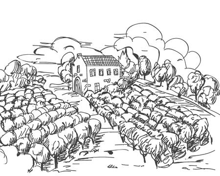 Vintage engraved, hand drawn vineyards landscape Banque d'images - 116285613