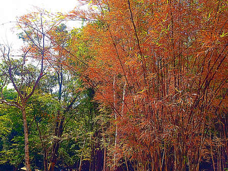 good color: The trees good view good color.