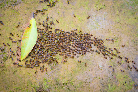 Motion blur top view of motion swarm of ants on dirt with moss in the forest