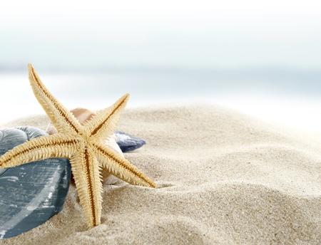 estrella de mar: Estrellas de mar en la playa