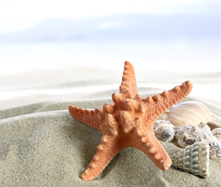 beach animals: Starfish and shells on the tropical Beach