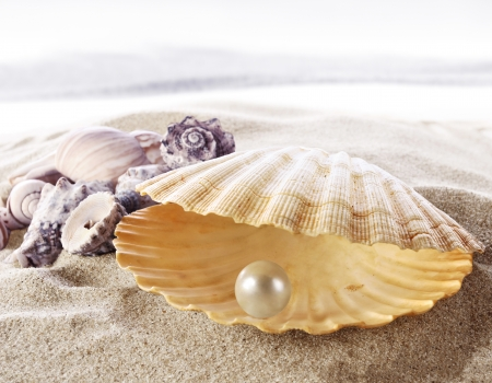 pearl shell: Shell with a pearl  Stock Photo